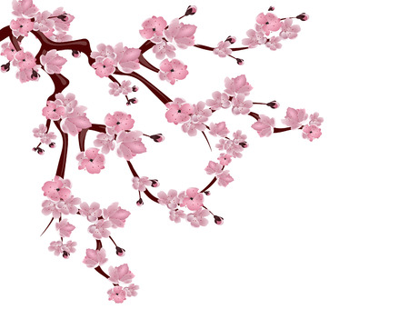 Japanese cherry tree. Spreading branch of pink cherry blossom. Isolated on white background. Vector illustration