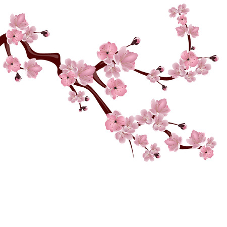 Japanese cherry tree. A branch of pink cherry blossom. Isolated on white background. Vector illustration