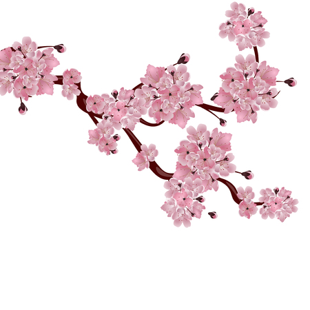 Lush Japanese cherry tree. The branch of pink cherry blossom. Isolated on white background. Vector illustration
