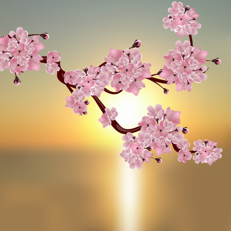 japanese garden: Lush Japanese cherry. A branch of pink cherry blossom. Against the backdrop of a beautiful sunset. Vector illustration