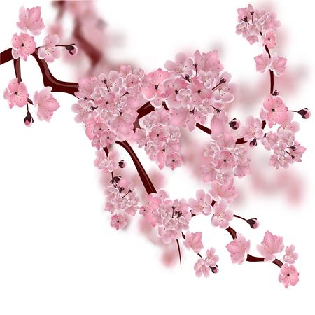 cerezo japonés. La rama de flor de cerezo rosa suave y esponjosa. Aislado en el fondo blanco con un fondo borroso. ilustración vectorial Ilustración de vector
