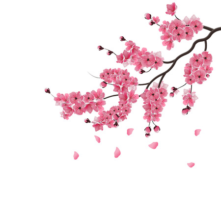 sakura. Lush the branch of dark pink sakura blossom. Isolated on white background. Vector illustration