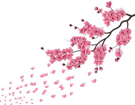 sakura. Lush the branch of dark pink sakura blossom in the wind . Isolated on white background. Vector illustration
