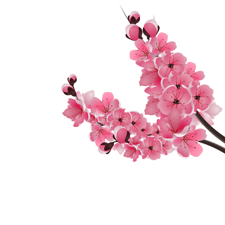 sakura. Two lush branch dark pink cherry blossom close-up. Isolated on white background. Vector illustration