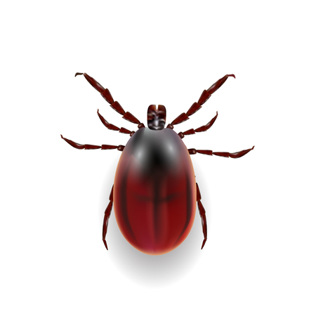 Harvest bug on a white background wiht shadow . Vector illustration Illustration