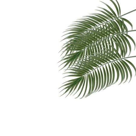 subtropical plants: Three tropical palm leaves. Isolated on white background. Vector illustration Illustration