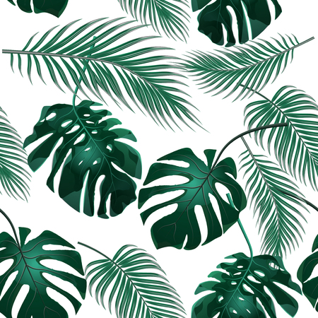 thickets: Tropical palm leaves. Jungle thickets. Seamless floral background. Isolated on white.  illustration