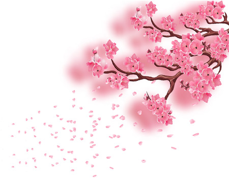 Branches with a blooming pink cherry and not with focused. Sakura. The petals fly in the wind. Isolated on white background. Vector illustration Illustration