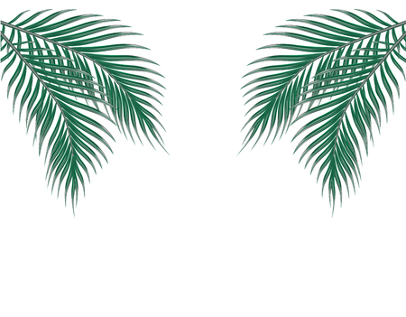 Tropical green palm leaves on both sides. Isolated on white background. illustration Illustration