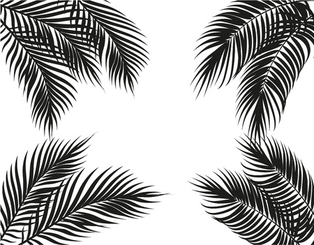 Tropical black and white palm leaves on four sides. Illustration