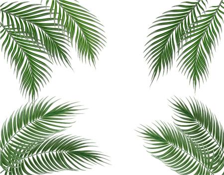 Tropical green palm leaves on four sides. Set. Isolated on white background. illustration Stock Photo