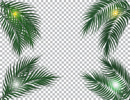 raster: Tropical dark green palm leaves on four sides. Sun rays. Isolated on checker background. illustration
