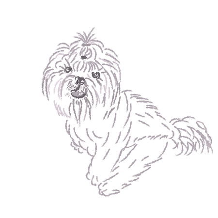 shih tzu: A funny picture of a Shih Tzu dog. 2018 year of the dog. illustration.