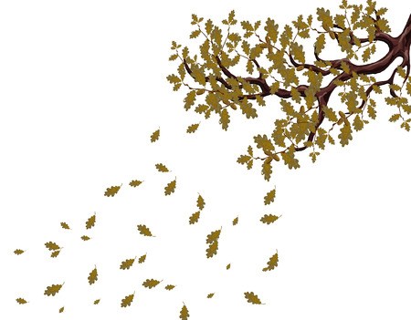 In autumn, a yellowed branch of a large oak tree with acorns. Flying leaves. Flyer, invitation card or business card. Isolated on white background. illustration Stock Photo