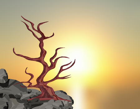 Landscape on the sunset. A curved tree without leaves on a rock among the stones.