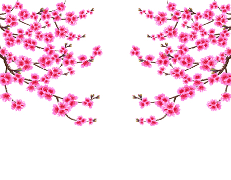 Sakura. Card. Branched branches of cherry blossom spring tree with purple flowers and kidneys on both sides. Isolated on white background. illustration