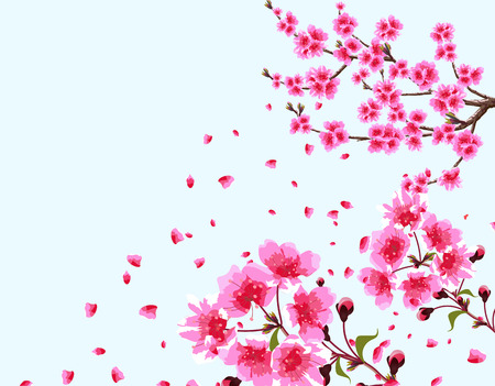 Sakura. A branched curved branch of a blossoming cherry spring tree with purple flowers and buds. Flowers close-up. Isolated Illustration Stock Photo