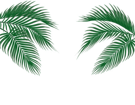 Different in form tropical dark green palm leaves on both sides. Isolated on white background. illustration