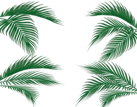 Different in form tropical dark green palm leaves on four sides. Set. Isolated on white background. illustration Stock Photo