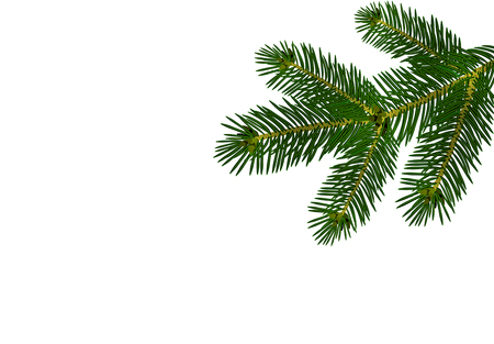 A green realistic lush branch of fir or pine. Isolated on white background. vector illustration Illustration
