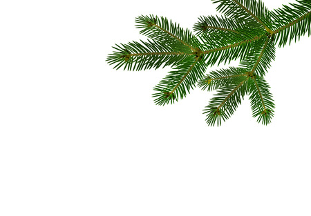 Green realistic branch of fir or pine close-up. branched out. Isolated on white background. vector illustration Illustration