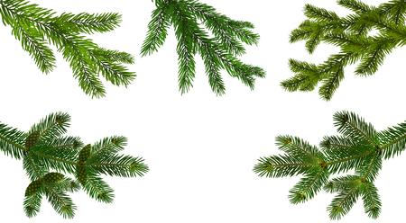 Weihnachten, Neujahr. Stellen Sie aus den fünf grünen realistischen Zweigen der Tannen- oder Kiefernnahaufnahme ein. verzweigt. Isoliert auf weißem Hintergrund. Vektor-Illustration Vektorgrafik