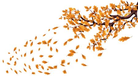 Rama de otoño amarillo de un gran roble con bellotas. Vuela sobre las hojas y gira con el viento. Ilustración vectorial
