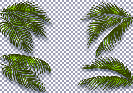 Tropical dark green palm leaves with a shadow are distinguished by their shape. Isolated on checker background. Vector illustration