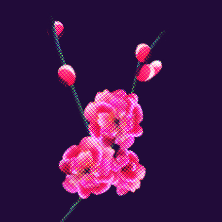 Branch with delicate pink flowers and buds. Sakura points. isolated on dark purple background. vector illustration