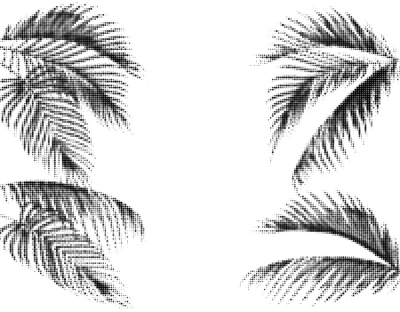 Various tropical palm leaves. Stylized Dots Design in Black and White Execution. Isolated on white background. Vector illustration