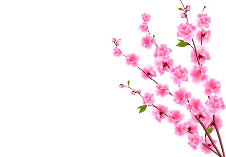 Sakura. Decorative flowers of cherry with buds on the branches, a bouquet. Can be used for cards, invitations, banners, posters. Vector illustration