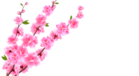 Sakura close up. Decorative flowers of cherry with buds on the branches, a bouquet. Can be used for cards, invitations, banners, posters. Vector illustration