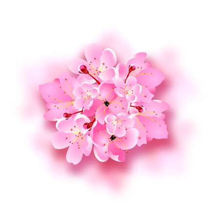 Decorative sakura flowers, bouquet, design elements with shadow. Can be used for cards, invitations, posters. Vector illustration