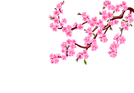 Sakura. Cherry flowers with buds and leaves on a branch. Can be used for cards, invitations, banners, posters. Vector illustration