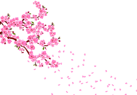 Sakura. Branches with pink flowers, leaves and cherry buds. Petals fly in the wind. isolated on white background. vector illustration