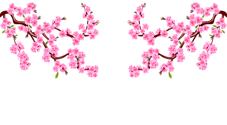 Sakura. Branches with purple flowers. Cherry blossoms is located on both sides. Inscription. Isolated on white background. Vector Illustration