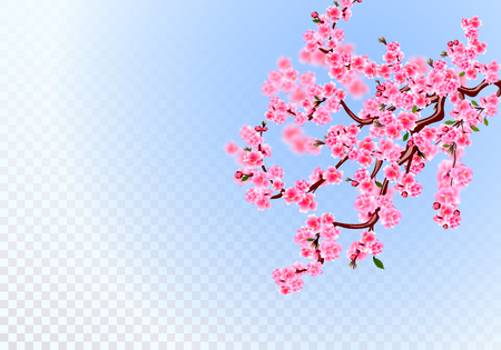 Sakura. Lush branches with light purple flowers, leaves and cherry buds. Defocus effect. On a transparent background. Vector illustration Çizim