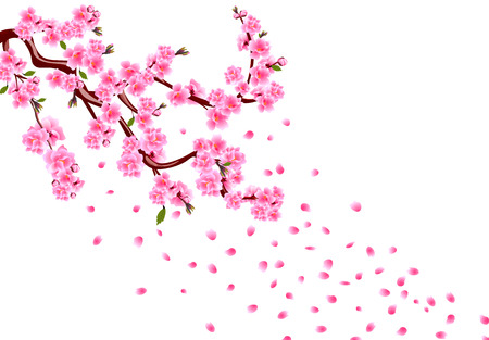 Sakura. Branches with purple flowers, leaves and cherry buds. Cherry drops petals. isolated on white background illustration Stock Photo