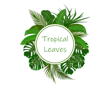 Set. Green tropical leaves of banana, coconut, monstera and ogawa. In a circle place for ads, advertising. Vector illustration