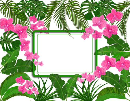Green tropical leaves of banana, coconut, monstera and ogawa, Pink orchid. space for ads, advertising. Vector illustration