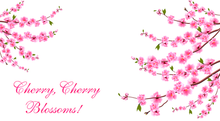 Sakura. Cherry blossoms is located on both sides. Inscription. Isolated on white background. Vector Illustration Illustration