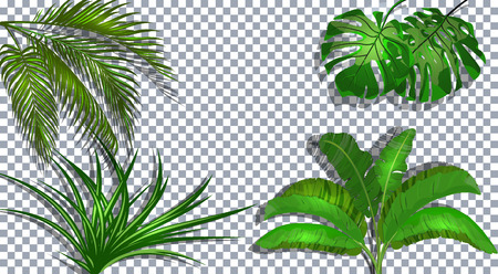 Set. Green leaves of banana, coconut, monstera and ogawa. Tropical . On a transparent background with a shadow. illustration