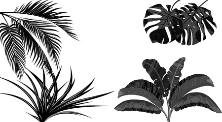 Set. Black and white leaves of banana, coconut , monstera and ogawa.Tropical for print, picture or postcard. Vector illustration