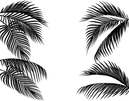 Set of black and white tropical palm leaves. Isolated on white background illustration Stock Photo