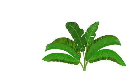 Bright green leaves of banana palm. Bush. Tropical theme. for print, image or postcard. illustration
