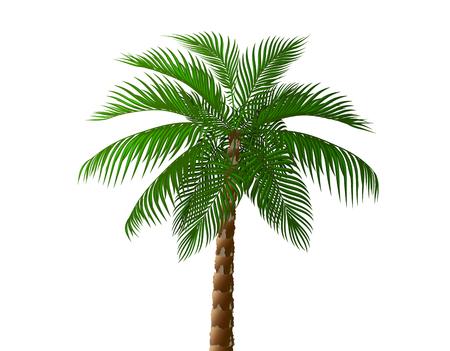 Tropical lush dark green palm tree. illustration
