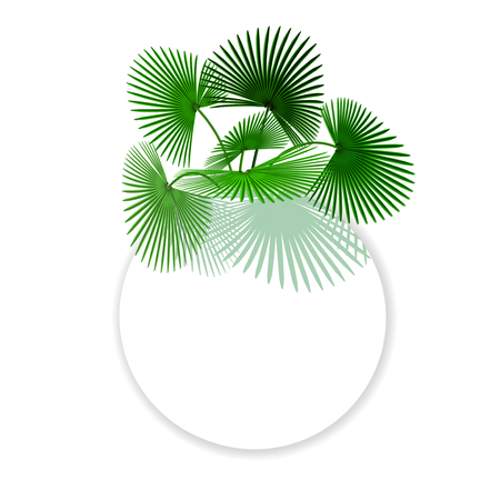 Green tropical leaves Palm In a circle place for Ads, Advertising.  illustration
