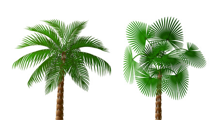 Two Tropical lush dark green palm trees of different types. illustration