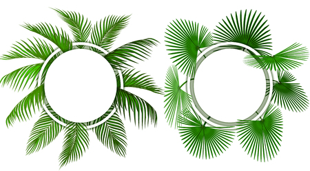 Two kinds of green tropical palm leaves. Place for advertising, announcements. illustration