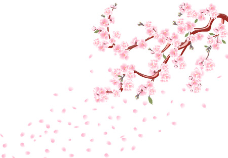 Sakura. Branches with pastel flowers, leaves and cherry buds. Cherry Petals. Isolated on white background illustration